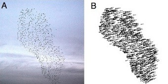 Starling Flocks Behave Like Flying Magnets | Science | WIRED | Heal the world | Scoop.it