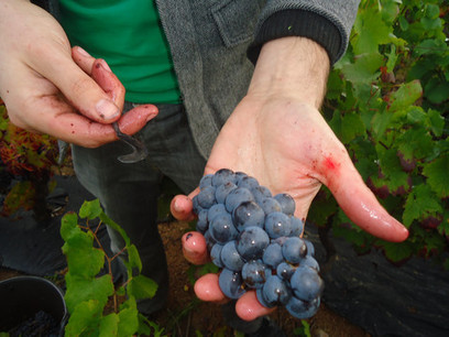 There really is more to Beaujolais than Nouveau! - Red Squirrel Wine | Beaujolais | Scoop.it