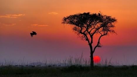 Singita Grumeti: Vom Jagd-Gebiet zum Vorzeige-Reservat | Afrika | Scoop.it