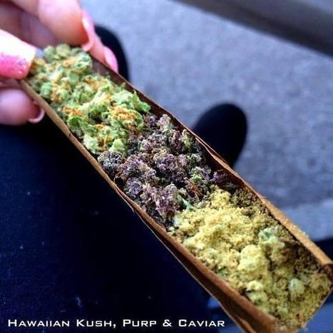 Smokewire - Blunt Hawaiian Kush, Purp & Caviar   Marijuana - Bongs - 420 - Funstuff - Cannabis   Scoop.it