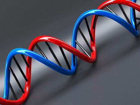L'heure de notre mort est programmée dans un de nos gène | Rhit Genealogie | Scoop.it