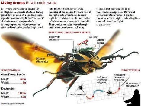 Pour la première fois, des scientifiques contrôlent des scarabées en vol | Connected objects and Geek stuff | Scoop.it