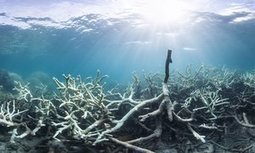 Great #Barrier Reef tourism operators refuse #media and #politicians access to bleached reefs #Australia | Messenger for mother Earth | Scoop.it