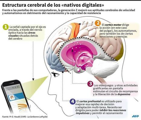 "Estructura cerebral de los ""nativos digitales"" 