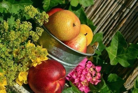3 consejos básicos para tener un estilo de vida saludable | Apasionadas por la salud y lo natural | Scoop.it
