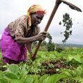 Reality TV show gives Kenyan farms a makeover | Agricultural Biodiversity | Scoop.it