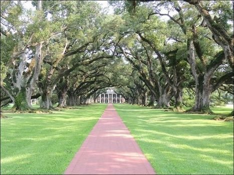 Today's Winner - July 4, 2012 | recordonline.com | Oak Alley Plantation: Things to see! | Scoop.it