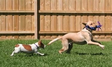 Some Great Ways to Challenge Your Dog's Mind   Iron Dog   Dog Treats, Accessories and Training   Scoop.it