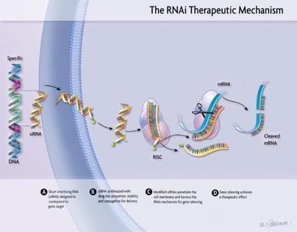 New frontiers in drug discovery - InPharm | NanoBioPharmaceuticals | Scoop.it