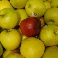 Una mela al giorno combatte il colesterolo cattivo | FOOD TECHNOLOGY  NEWS | Scoop.it