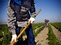 California Farm Labor Shortage 'Worst It's Been, Ever' | Sustain Our Earth | Scoop.it