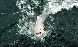 Six arrested in Spain on charges of illegal fishing of protected species | News on the World from a Nordic view | Scoop.it