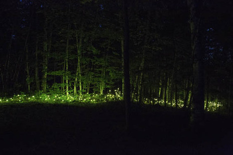 Installation Takes Visitors On A Nocturnal Stroll Through An Enchanted Forest | Nonprofit Storytelling | Scoop.it