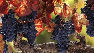Makeover time! France's Languedoc wine region ups its quality   Vitabella Wine Daily Gossip   Scoop.it