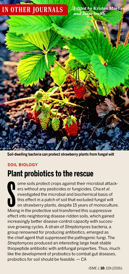 Science: Plant probiotics to the rescue (2016) | Veille Scientifique Agroalimentaire - Agronomie | Scoop.it