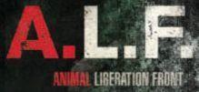 Découvrez la bande annonce du film A.L.F | Shabba's news | Scoop.it