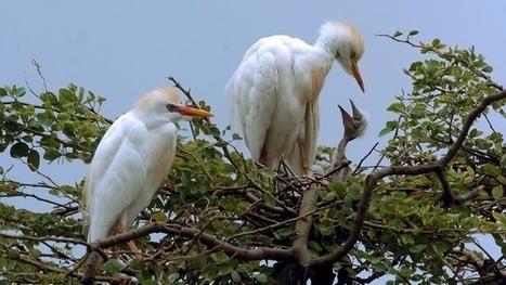 Colombie : 50% des écosystèmes terrestres en danger | Biodiversité & Relations Homme - Nature - Environnement : Un Scoop.it du Muséum de Toulouse | Scoop.it