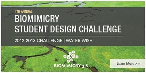 Tap Nature's Genius to Solve a Critical Water Management Issue :: Biomimicry 3.8 | Biomimetics | Scoop.it