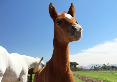 Agriculture Center 'foal' of horses | Arizona Daily Wildcat | CALS in the News | Scoop.it