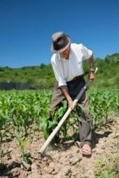 Periti agrari, stipulata la convenzione assicurativa - Agronotizie | Responsabilità civile professionale | Scoop.it