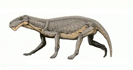 Las extinciones masivas acaban con las especies más prescindibles para el conjunto | Educacion, ecologia y TIC | Scoop.it