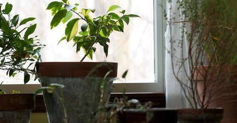 Your Wireless Router Could Be Murdering Your Houseplants | Machine To Machine | Scoop.it