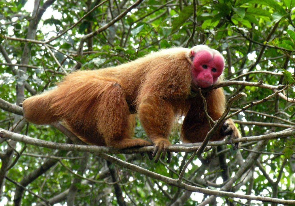 Les animaux des forêts aussi influent sur le climat