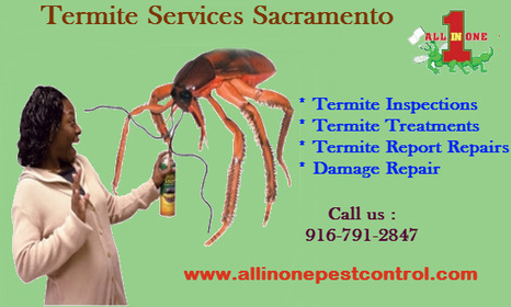 Termite Control Services In Sacramento | All in One Pest Control | Scoop.it