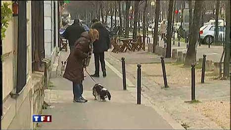 Une ville utilise les caméras de surveillance pour traquer les crottes ... - TF1 | Plusieurs idées pour la gestion d'une ville comme Namur | Scoop.it