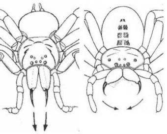 Mais non, mais non, les araignées ne piquent pas ! | MARTINEZ André | Scoop.it