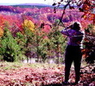 A Complete Fall Color and Autumn Leaf Viewing Guide | forestry | Scoop.it