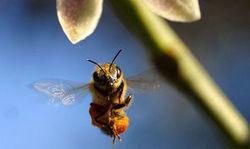 Pollinisateurs: leur travail, c'est notre santé - Journal de l'environnement (Abonnement) | apiculture 2.0 | Scoop.it