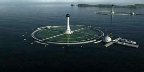 Algues 2050: Palme d'or pour un film sur l'algoculture | Les algues en Bretagne | Scoop.it