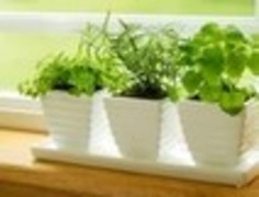 How to grow a garden without a yard | Container Gardening | Scoop.it