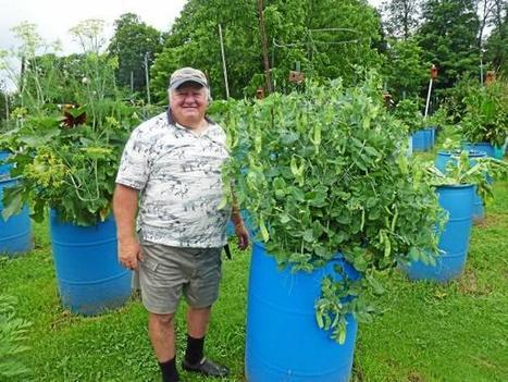 Goshen man grows vegetables in 800 backyard barrels - News - The Litchfield County Times   Digging The Earth   Scoop.it