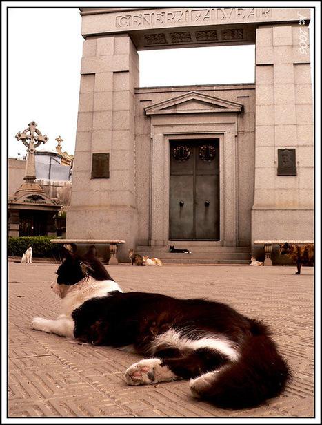 Key West, Ypres, Poezenboot... : ces lieux réservés aux chats (épisode 2) — | Les chats c'est pas que des connards | Scoop.it