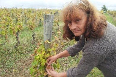 Une année horrible ? | Agriculture en Dordogne | Scoop.it