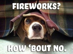 Shih Tzu Fear Of Storms and Fireworks | Shih Tzu & Furbabies | Scoop.it