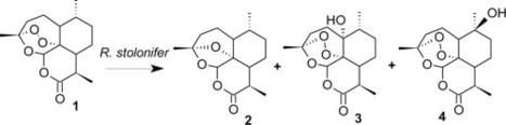 new derivatives of antimalarial drug artemisinin essay Short chain derivative and piperaquine new compunds sar : antimalarial drugs 1 artemisinin derivatives• artesunate• artemether• arteether.