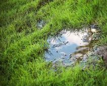 Helping a soggy lawn: Grass Clippings - Great Lawn Advice   Gardening   Scoop.it