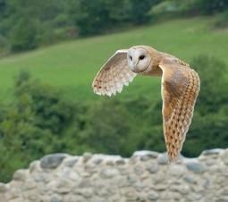Biomimétisme : des éoliennes plus chouettes et moins bruyantes | L'ENERGEEK : l'énergie facile en quelques clics ! | Biomimétisme - Biomimicry | Scoop.it
