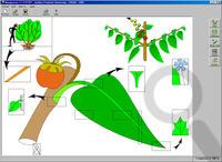 L'identification des adventices assistée par ordinateur avec le système IDAO | Insect Archive | Scoop.it