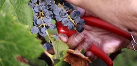 Pourquoi l'avenir du vin passe par le bio. | Vos Clés de la Cave | Scoop.it