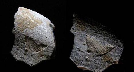 Le sosie de l'oiseau de Twitter gravé sur un silex il y a 35 000 ans | Farfeleusement Vôtre | Scoop.it