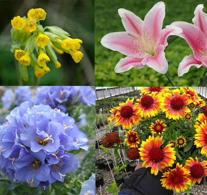 7 alluring and colorful flowers that are easy to grow for beginners | Garden, landscape, plants, flowers | Scoop.it