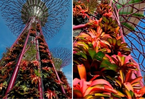 Solar-Powered Supertrees Sprout at Singapore's Gardens by the Bay - New Photos!   Inhabitat - Green Design Will Save the World   Garden Designer   Scoop.it