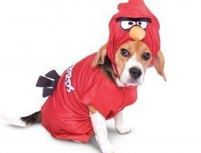 Dogs Angry Birds Halloween Costumes | Best Halloween Ideas | Scoop.it