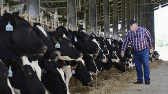 Whole milk might be a better choice for children, scientists say | Raising Children | Scoop.it