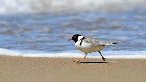 "Birds on the brink: 13% of  species face extinction | NIALA TUANER ""Hobbyist Wildlife Photographer"" | Scoop.it"
