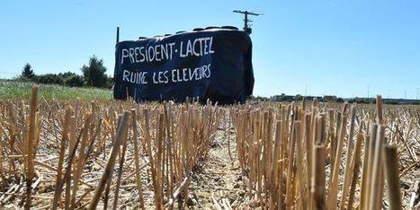 Crise du lait : «Baisser la production ne réglerait pas la situation des éleveurs» - Le monde | Le Fil @gricole | Scoop.it